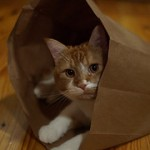 """Let the cat out of the bag"""